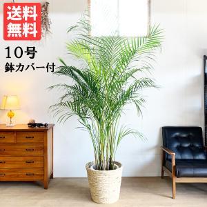 送料無料 アレカヤシ ヤシの木 ナチュラル鉢カバー付 大サイズ 大鉢 10号鉢 観葉植物 ヤシ 大型|pg869