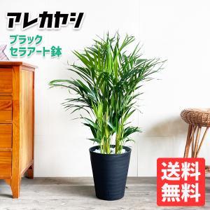 アレカヤシ ヤシの木 観葉植物 ブラックセラアート鉢 送料無料
