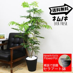 エバーフレッシュ  観葉植物 ブラックセラアート鉢 送料無料
