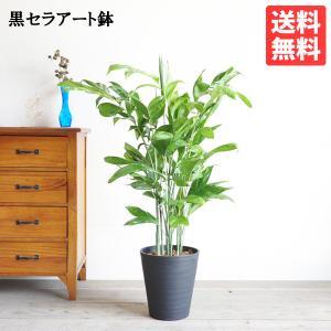 高性チャメドレア ヤシの木 観葉植物 ブラックセラアート鉢 送料無料 即日出荷|pg869