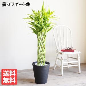 ミリオンバンブー 観葉植物 ブラックセラアート鉢 幸運の木 ドラセナ サンデリアーナ 送料無料|pg869