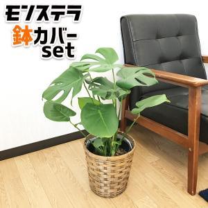 モンステラ 鉢カバー付  観葉植物 中型|pg869