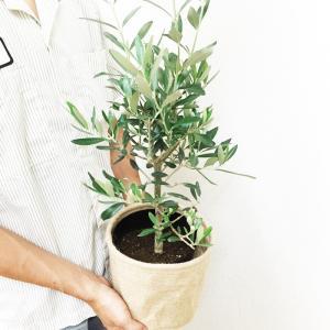 オリーブ ナチュラルな麻素材 送料無料 鉢カバ...の詳細画像1