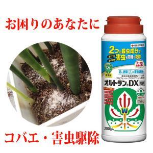 観葉植物の害虫 駆除 オルトランデラックス錠剤 観葉植物 コバエ 幼虫 卵に効果あり 送料無料