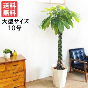 送料無料 パキラ 大サイズ 大鉢 10号鉢 観葉植物 大型|pg869