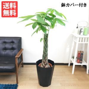 パキラ 8号 ブラック セラアート鉢 送料無料 ねじり 編み 観葉植物 中型 大型 インテリア|pg869