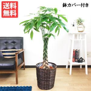 パキラ 鉢カバー付 観葉植物 送料無料 中型 大型サイズ|pg869
