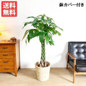パキラ ナチュラル鉢カバー付 観葉植物 送料無料 中型 大型サイズ|pg869