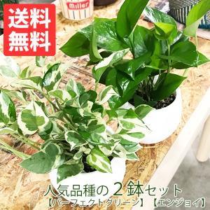 ポトス エンジョイ 吊り鉢 テラコッタ 観葉植物|pg869