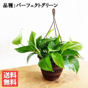 ポトス パーフェクトグリーン 吊り鉢 観葉植物|pg869