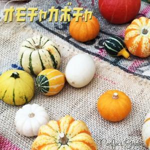 本物 おもちゃかぼちゃ 5個 ハロウィン 観賞用かぼちゃ 5球セット まとめ買い|pg869
