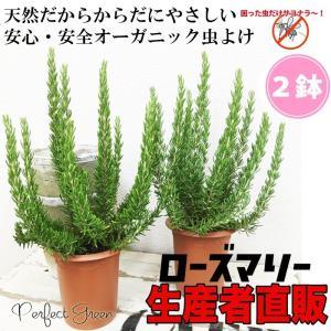 ローズマリー 2鉢セット 立性 鉢植え 観葉植物 苗 苗木 ハーブ 2株 送料無料|pg869