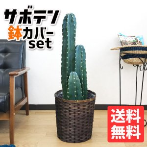 サボテン 柱サボテン 3本立 8号鉢 鉢カバー付  観葉植物 送料無料 pg869