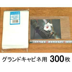 《クリックポスト送料無料》 【グランドキャビネ】300枚 <ショーレックス/写真袋> 無地 photoland