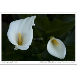 カラー・花言葉ポストカード photoroom-g