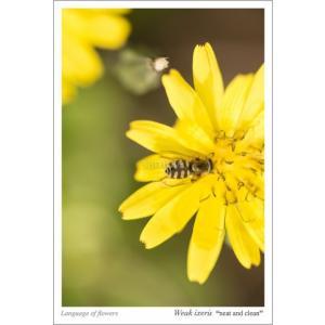 黄色い野の花とハチ・花言葉付ポストカード photoroom-g