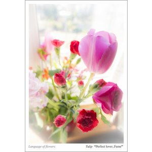 窓辺の花々・花言葉付ポストカード photoroom-g