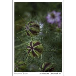 ニゲラの花言葉ポストカード(ニゲラの実) photoroom-g