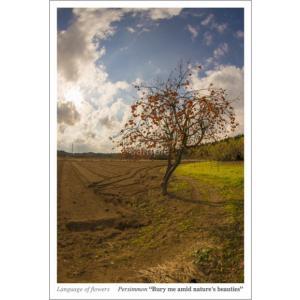 柿の木(花言葉付きポストカード) photoroom-g