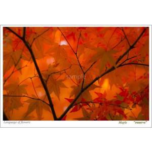 紅葉(花言葉付きポストカード) photoroom-g