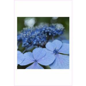アジサイのポストカード|photoroom-g