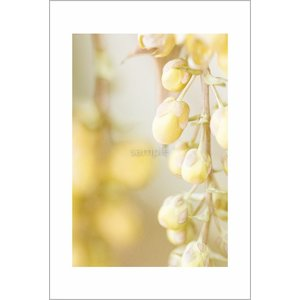 黄色いつぼみポストカード|photoroom-g
