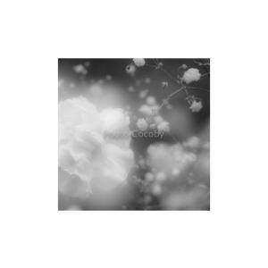 モノクロカーネーションポストカード|photoroom-g
