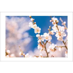 ツワブキ・石蕗ポストカード|photoroom-g