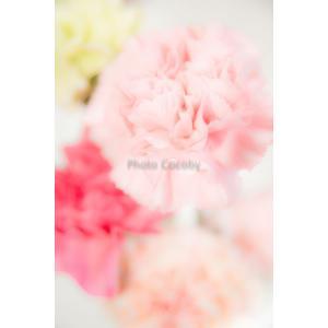 カーネーションポストカード|photoroom-g