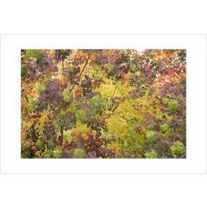 ポストカード・おもしろ紅葉|photoroom-g