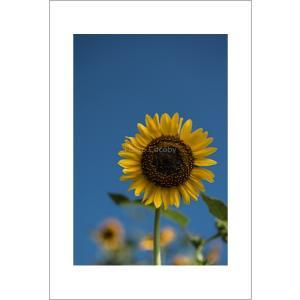 青空のヒマワリポストカード|photoroom-g