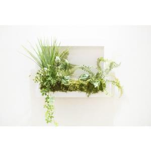 観葉植物ポットのポストカード縁なし photoroom-g