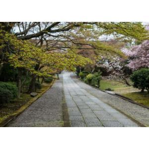 境内・京都ポストカード|photoroom-g