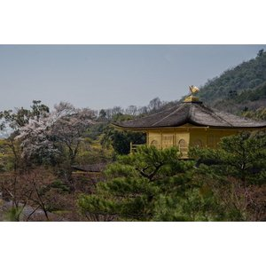 裏金閣寺ポストカード|photoroom-g