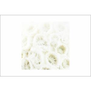 珊瑚のポストカード|photoroom-g