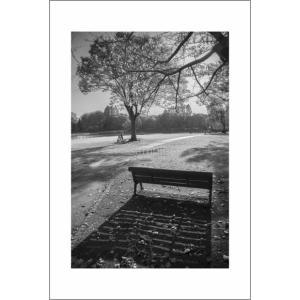 夕暮れのベンチ(モノクロポストカード|photoroom-g