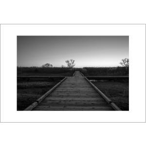 夜明けの木道モノクロポストカード|photoroom-g