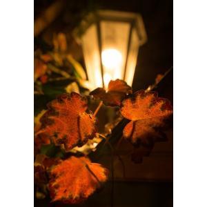 街灯と紅葉ポストカード|photoroom-g