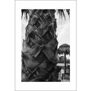 椰子の木モノクロポストカード|photoroom-g