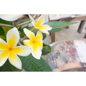 ハワイアンな花と椅子ポストカード|photoroom-g