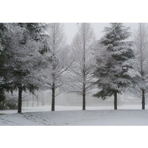 雪の木立・雪景色ポストカード|photoroom-g