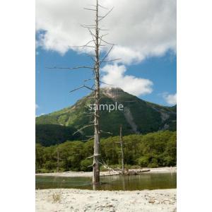 枯れ木と焼岳(上高地)ポストカード|photoroom-g