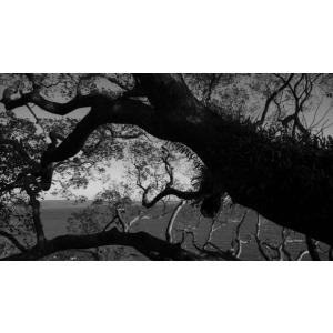 巨木・モノクロポストカード|photoroom-g