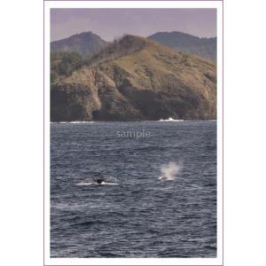 小笠原父島とクジラの潮吹きポストカード|photoroom-g