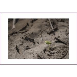 小笠原砂浜の芽のポストカード|photoroom-g