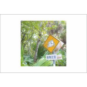 小笠原森動物注意のポストカード|photoroom-g