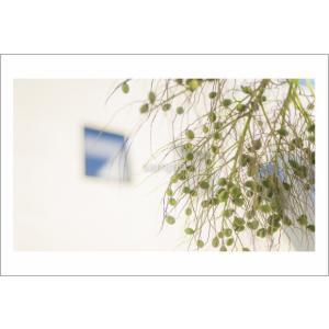 小笠原ヤタイ椰子の実ポストカード|photoroom-g
