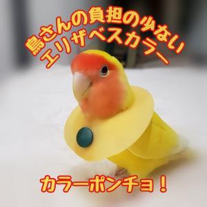 鳥 エリザベスカラー(ポンチョタイプ) 1枚・3サイズ・3色