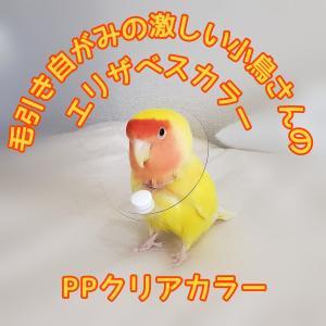 鳥 エリザベスカラー(クリア) 1枚・3サイズ・3色・3g