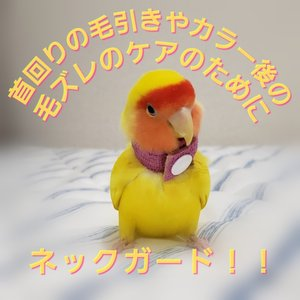 鳥 エリザベスカラー(ネックガード)2個セット・3サイズ